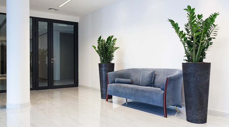 Sofas and plants